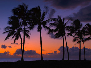 palm tree sunset of Hawaii